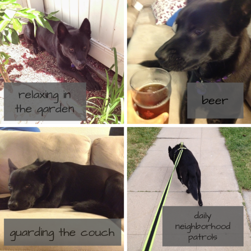Onyx's Favorite Things 1 - relaxing in the garden, beer, guarding the couch, daily neighborhood patrols