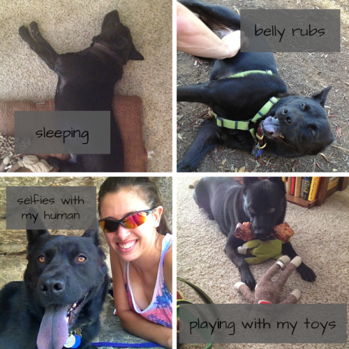 Onyx's Favorite Things 4 - sleeping, belly rubs, selfies with my human, playing with my toys