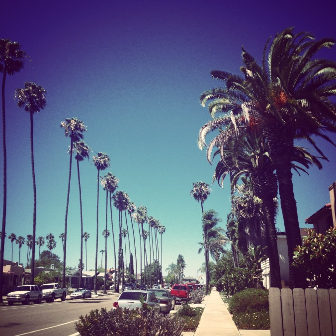 palm trees san diego