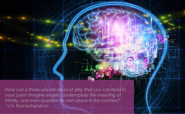 How can a three-pound mass of jelly that you can hold in your palm imagine angels, contemplate the meaning of infinity, and even question its own place in the cosmos? -V.S. Ramachandran