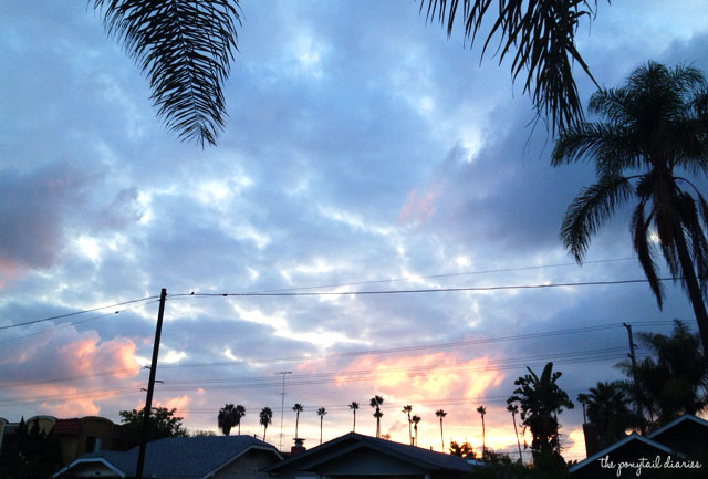 Halloween sunset with palm trees