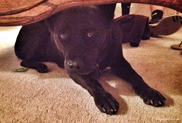 Onyx hiding under the coffee table {the ponytail diaries}