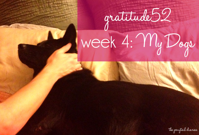 gratitude52, Week 4: My Dogs {the ponytail diaries}